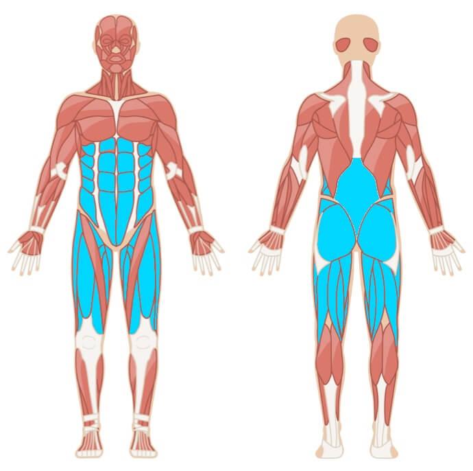 Kniebeugen alle Muskelgruppen